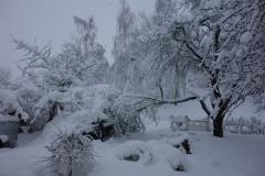Schneebruch Pflaumenbaum