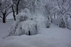 Schnee auf den Sträuchern