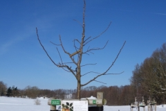 Baumreihe Eingang Grünes Klassenzimmer in Reddelich