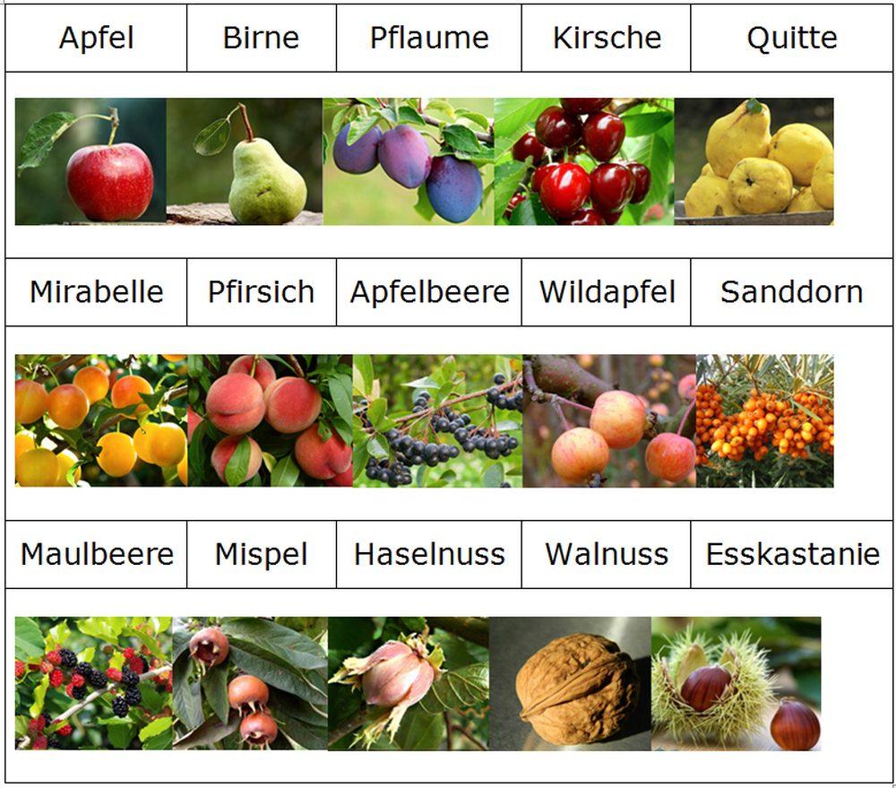 Übersicht Obstsorten