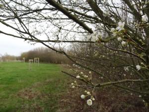 Obstarche Frühjahr 2016 klein 0022