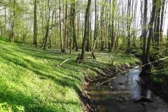 Bollhäger-Fließ-im-Erlenwald-bei-Brodhagen