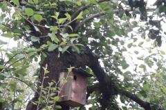 Vogel-Nistkasten in einem alten Birnenbaum