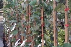 40 Apfel- und 20 Birnensorten