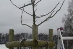 geschnittener Baum nachher mit Spreizholz