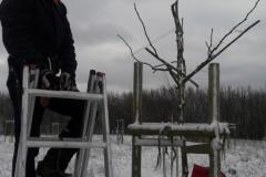 gechnittener Baum nachher