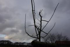 fertig geschnittener Baum