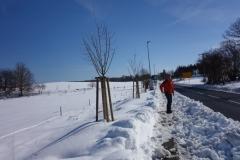 Baumreiche Pflaumen in der steffenshäger Straße in Reddelich