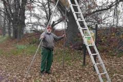 hohe Leiter zum Baumschnitt