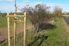 Wanderweg am Bollhäger Fließ mit neu gepflanztem Obstbaum der obstache