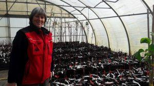 Magarete Haake von der Pflanzenhandel Hinrichs GmbH zeigt uns die 60 Winterhandveredlungen der Obstarche